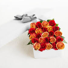 rosas-combi C-04