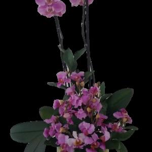 Orquidea 16